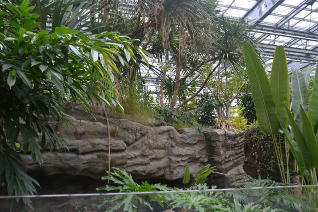 Дикий забег по Токио за 7 дней. День пятый. Зоопарк Уэно и детские магазины., фото № 37