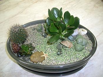 флористика, комнатные растения, мастер-класс, суккуленты, мини-садик, земля, песок