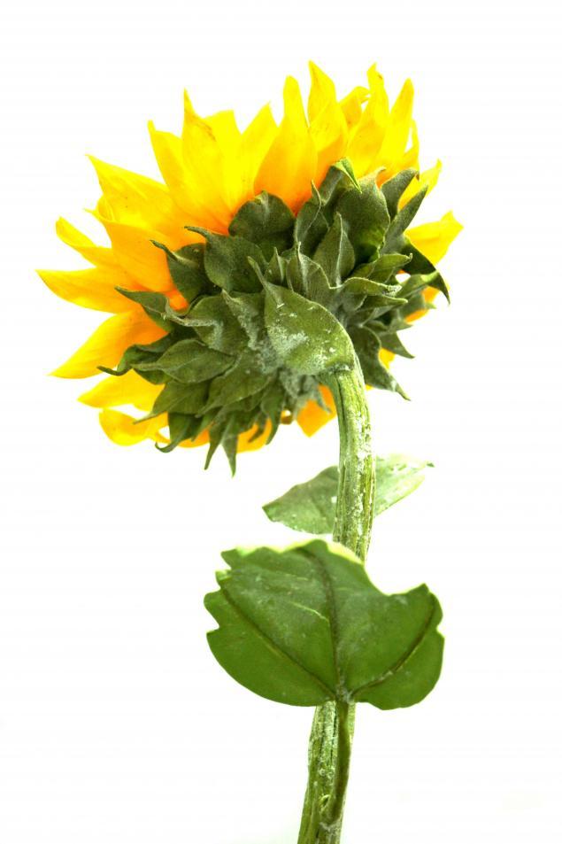 лепка цветов, школа лепки, цветы из полимерной глины