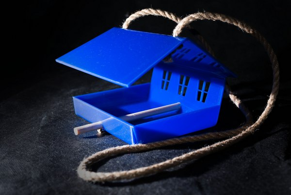 синий цвет, кормушка для птиц, птицы, биология, дача