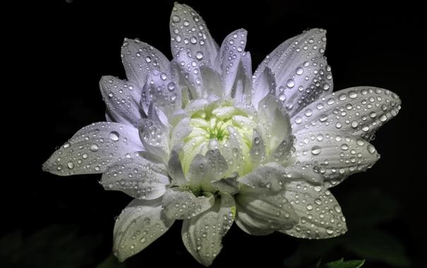 из каких цветов, значение цветов