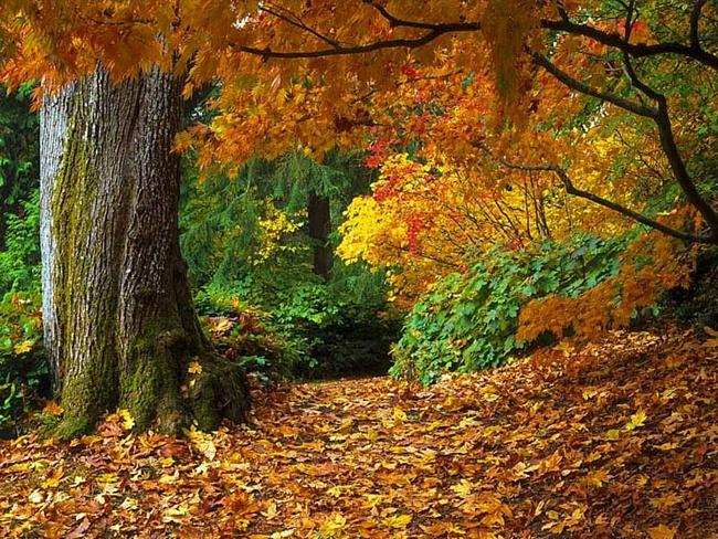 осень, янтарь