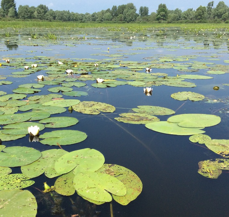 Великая река Волга в работах живописцев и фотохудожников, фото № 13