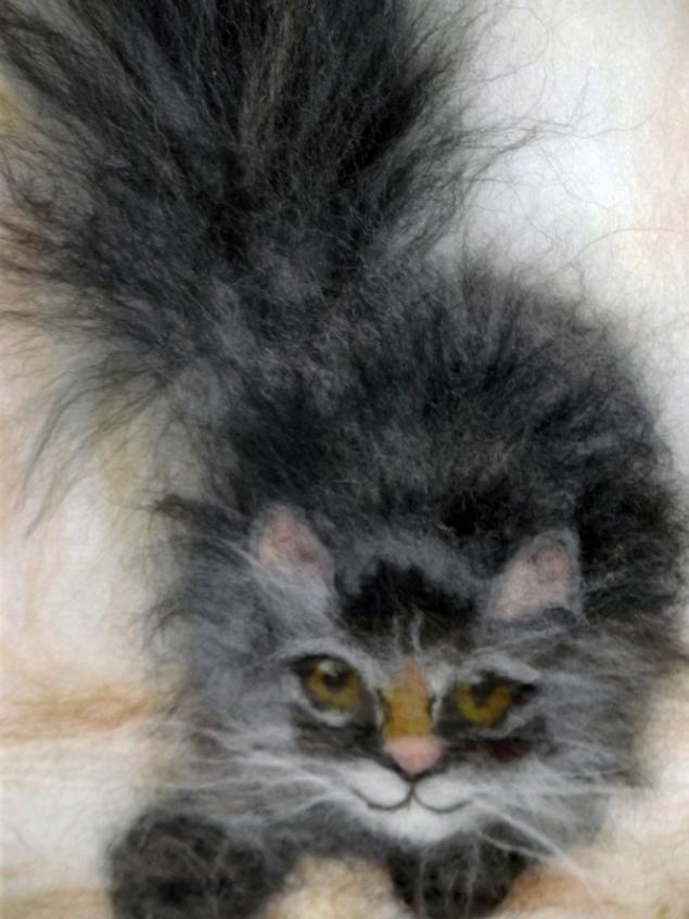 котик, шерсть