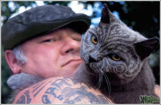 Зачем красить кошек?, фото № 26