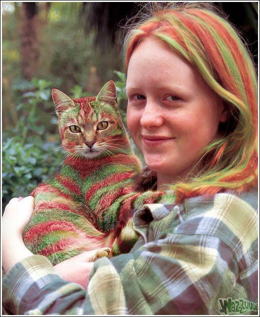 Зачем красить кошек?, фото № 16