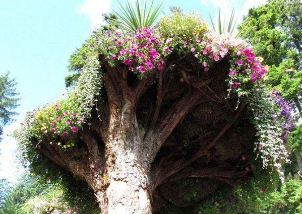 ботанический