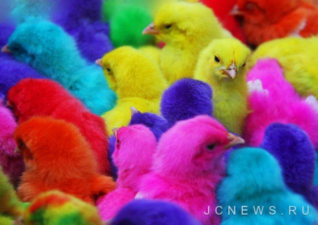 праздник, подарки к праздникам, цыплята