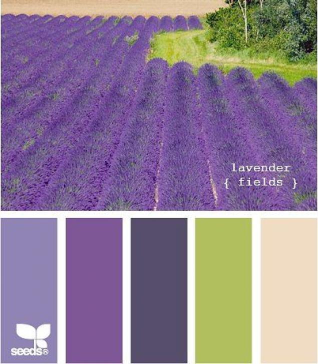 Фиолетовый цвет сочетание с другими цветами