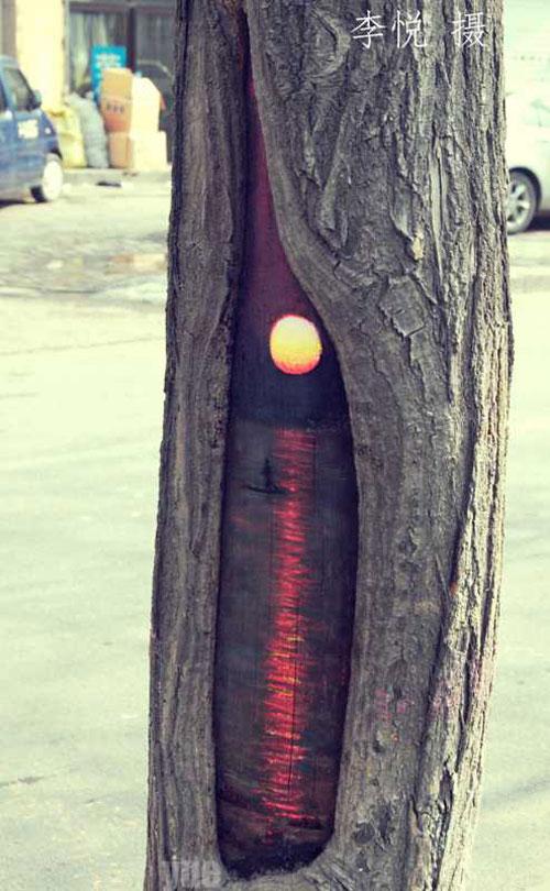 Tree-art, или Роспись деревьев, фото № 5