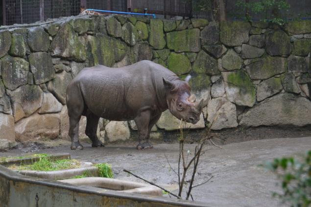 Дикий забег по Токио за 7 дней. День пятый. Зоопарк Уэно и детские магазины., фото № 45