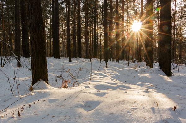 пейзаж, лес, мороз