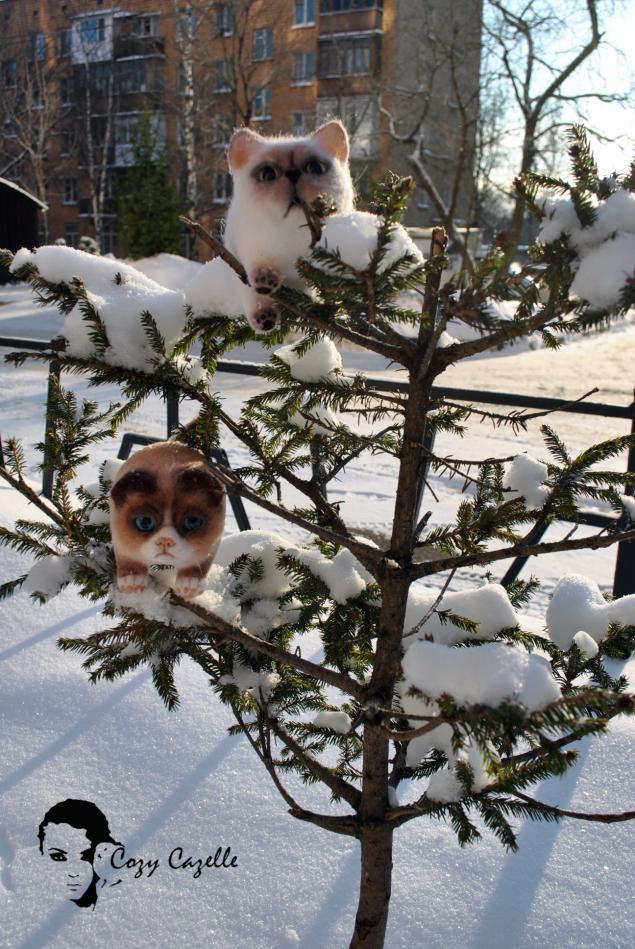 шаровые коты