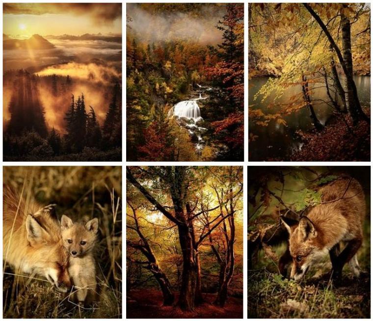 стихи, стихи об осени, стихотворение, наталья полежаева, для души, природа