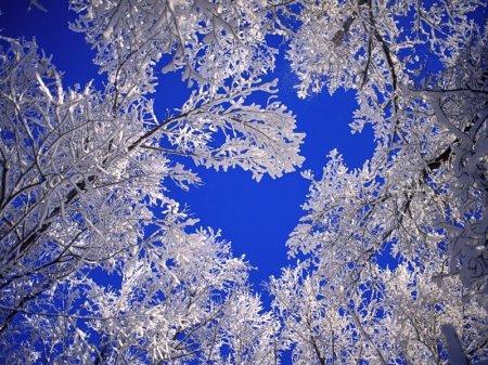Морозной зимой, фото № 13