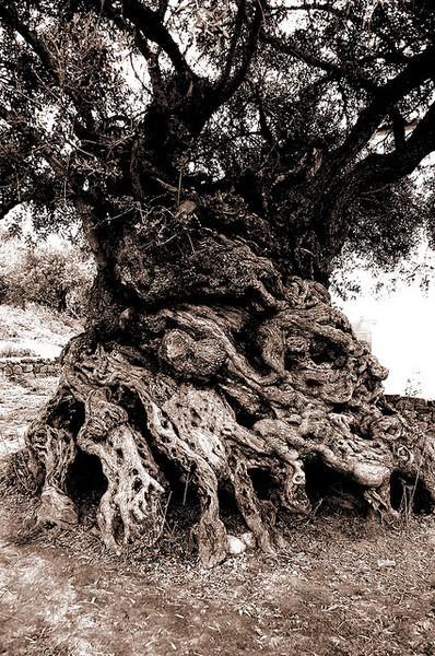 Bilo jednom jedno drvo - Page 2 120919061119