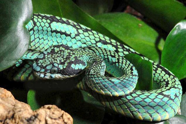 """针织外套:""""她是一条蛇"""" - maomao - 我随心动"""
