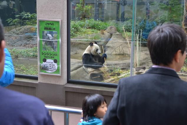 Дикий забег по Токио за 7 дней. День пятый. Зоопарк Уэно и детские магазины., фото № 7