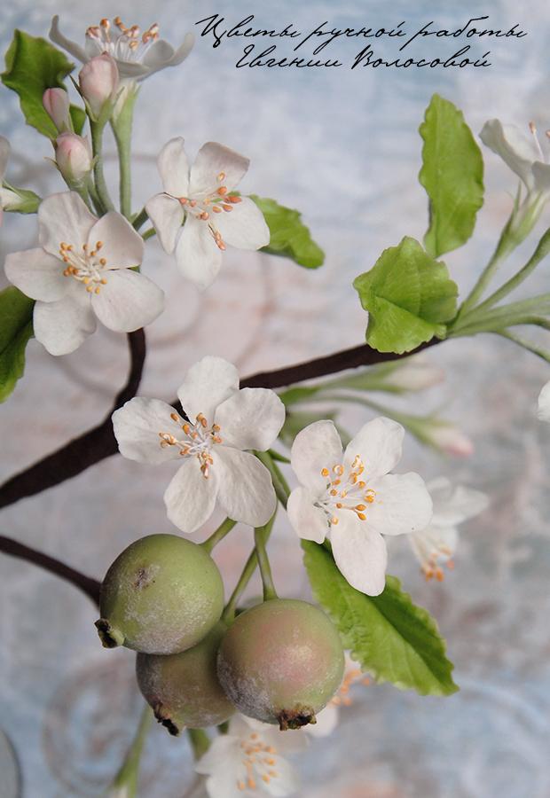 яблоневый цвет, холодный фарфор