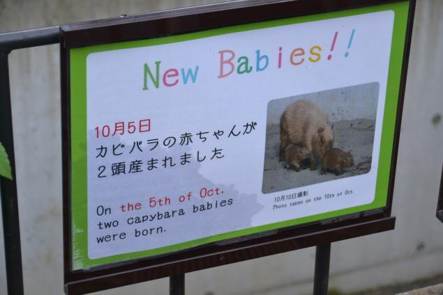 Дикий забег по Токио за 7 дней. День пятый. Зоопарк Уэно и детские магазины., фото № 15
