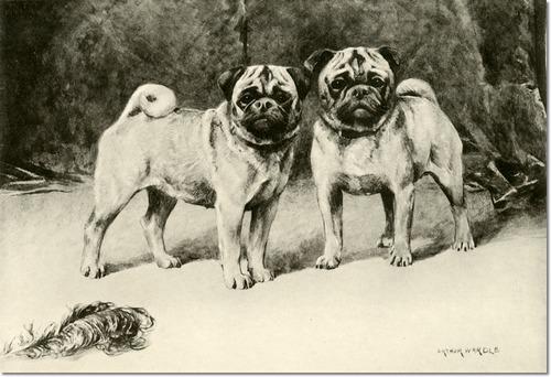 Arthur Wardle - Pugs Painting