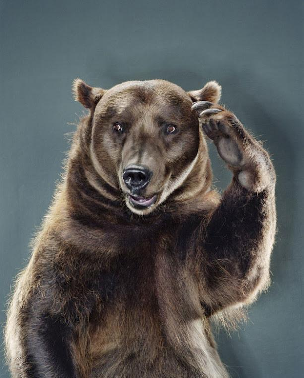 Картинки аватарки медведей