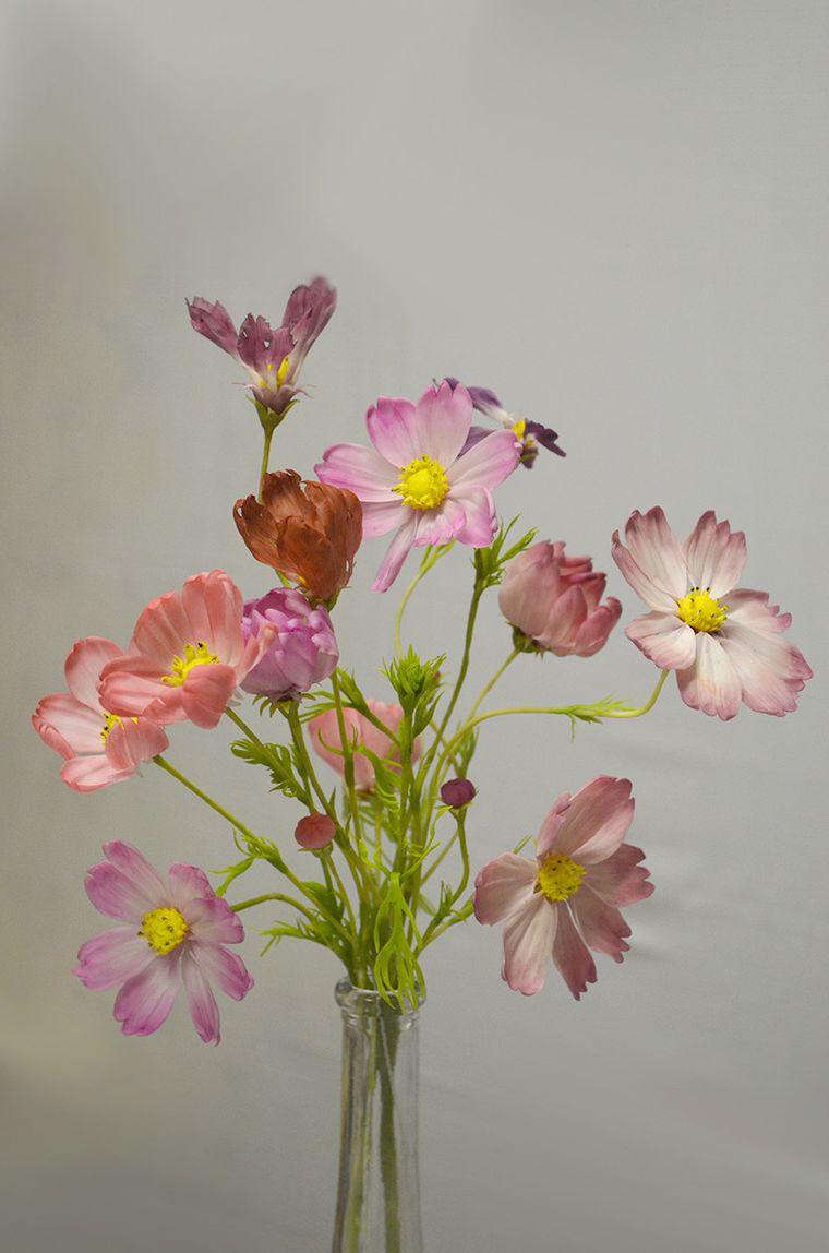 мастер-класс, курсы в жуковском, цветы ручной работы, холодный фарфор жуковский