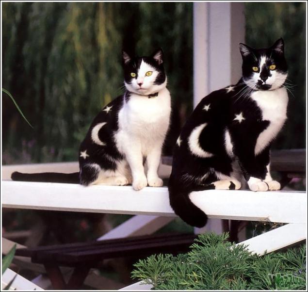 Зачем красить кошек?, фото № 25