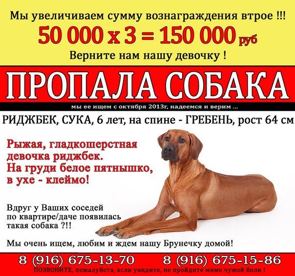 собака, помощь животным
