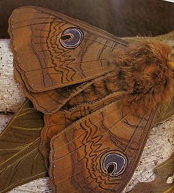 Текстильные шедевры, или Бабочки как источник вдохновения, фото № 3
