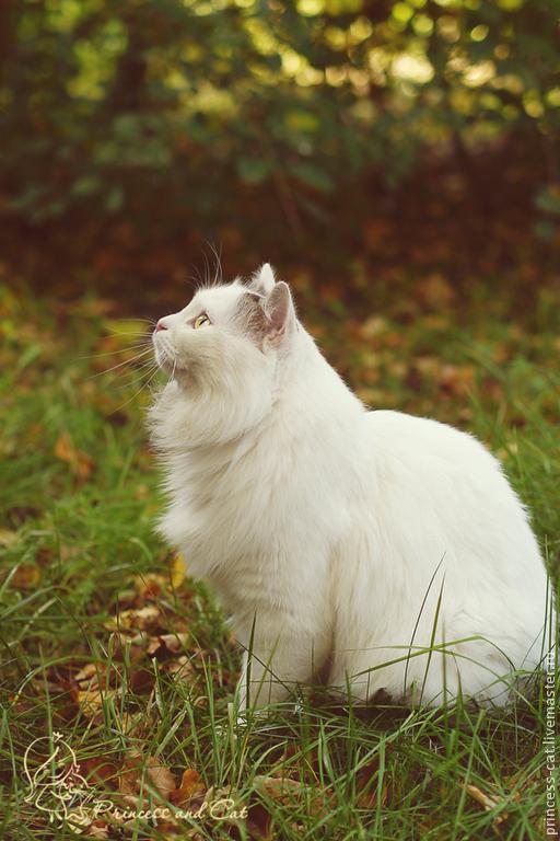 фотография, белый кот, картина в подарок