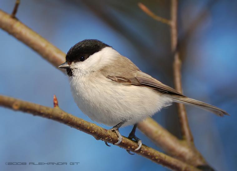 Каждой птице свой дом, фото № 10