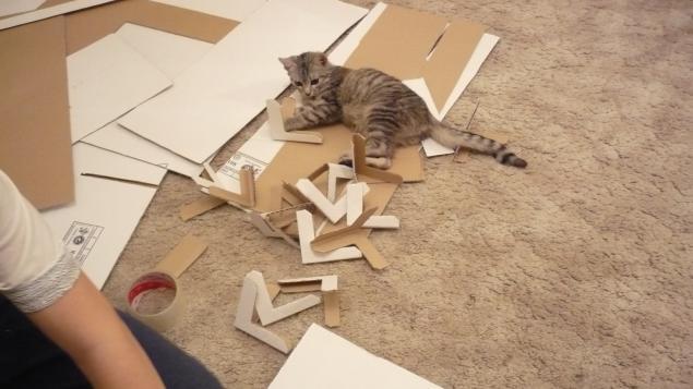 кошки котята котенок