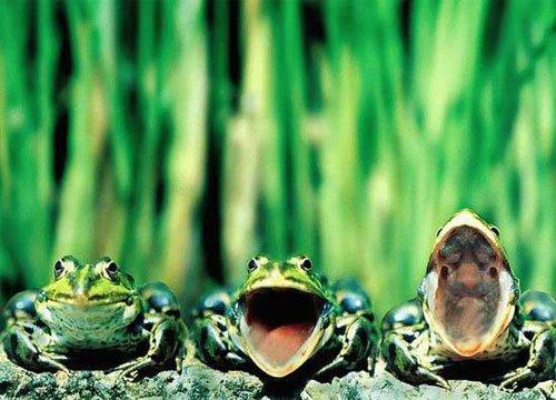 зеленый, кузнечик, детский