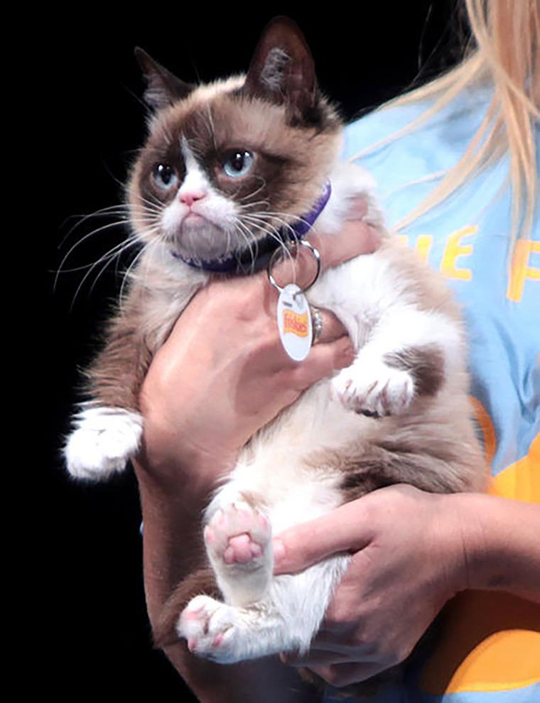 сердитый котик, полимерная глина