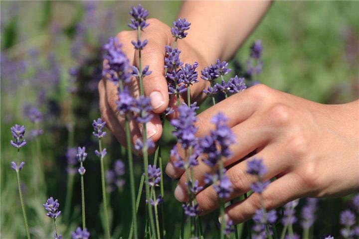 лавандовый, натуральные материалы, ароматы