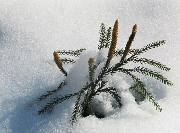 Морозной зимой, фото № 12