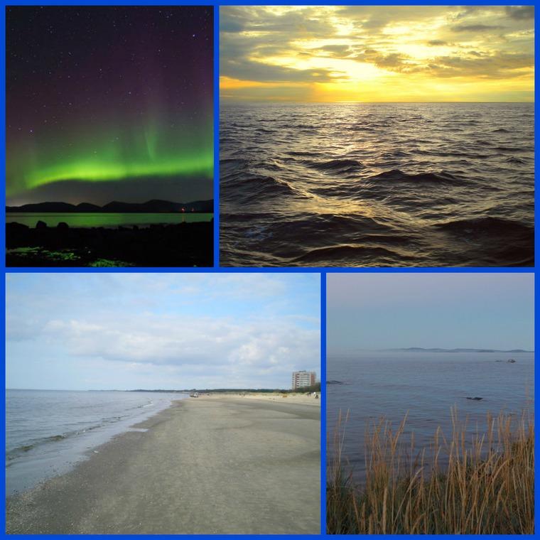 море, маргариткины чуди, вязание, медведь, авторская работа, ручная авторская работа