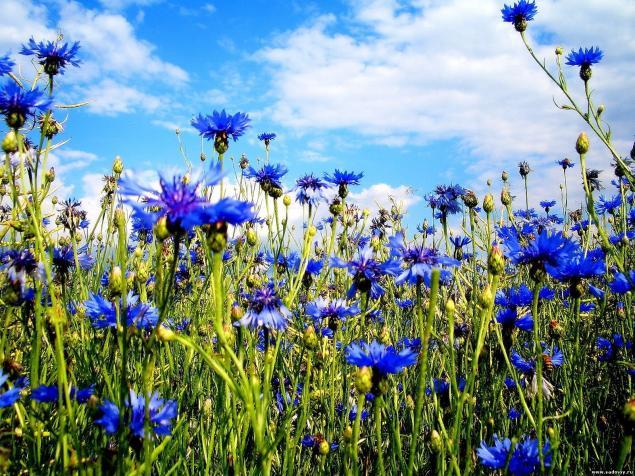 цветы, аукцион, аукцион сегодня, песня, игра