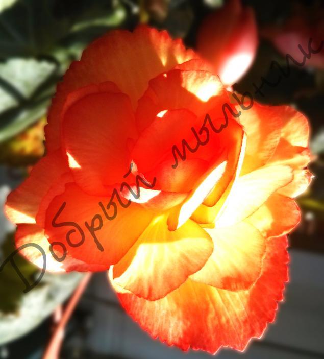 выгодная цена, гидролат, роза