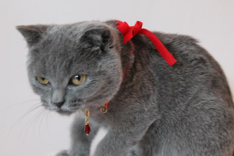 кошка, тапочка, украшение, бижутерия ручной работы, украшения ручной работы