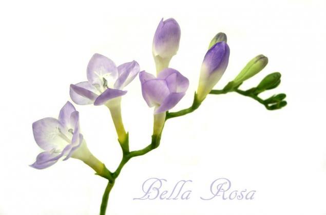 лепка лилии, керамическая флористика