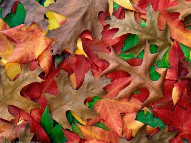 вышивка, галерея, октябрь