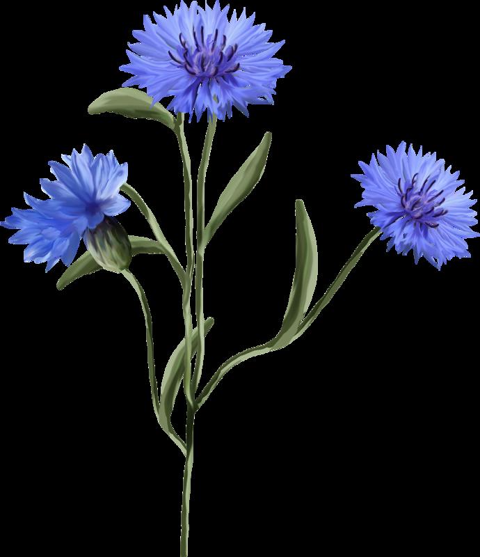 Днем рождения, картинка полевые цветы для детей на прозрачном фоне