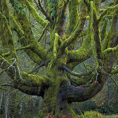 Bilo jednom jedno drvo - Page 2 120919173855