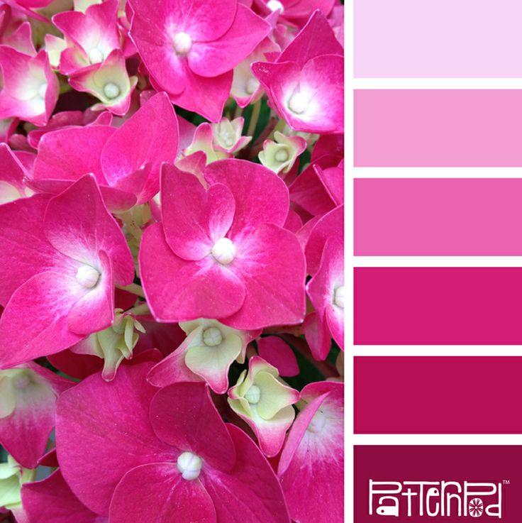Фото всех оттенков розового