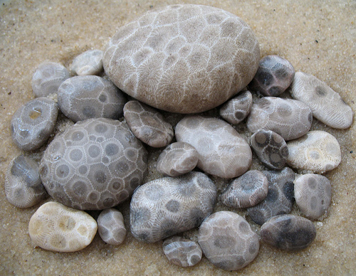some petoskey stones