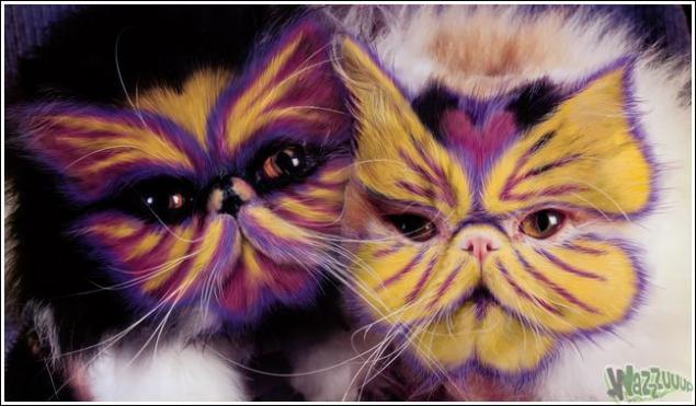Зачем красить кошек?, фото № 29