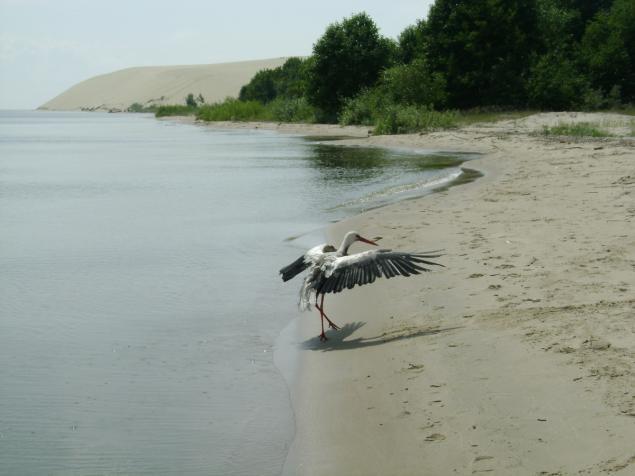 Песчаные дюны и луга покрытые мхом и