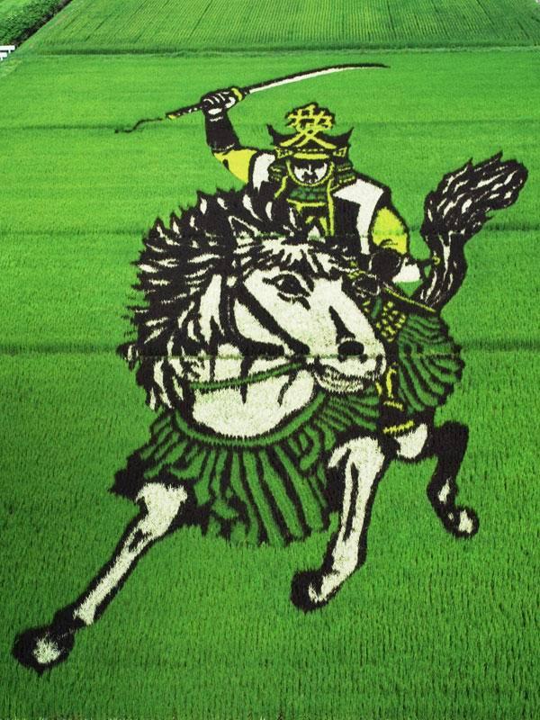 Огромные живые картины «растут» на рисовых полях в Японии (12 фото)
